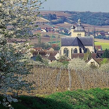 Vignoble de Champagne - Trépail